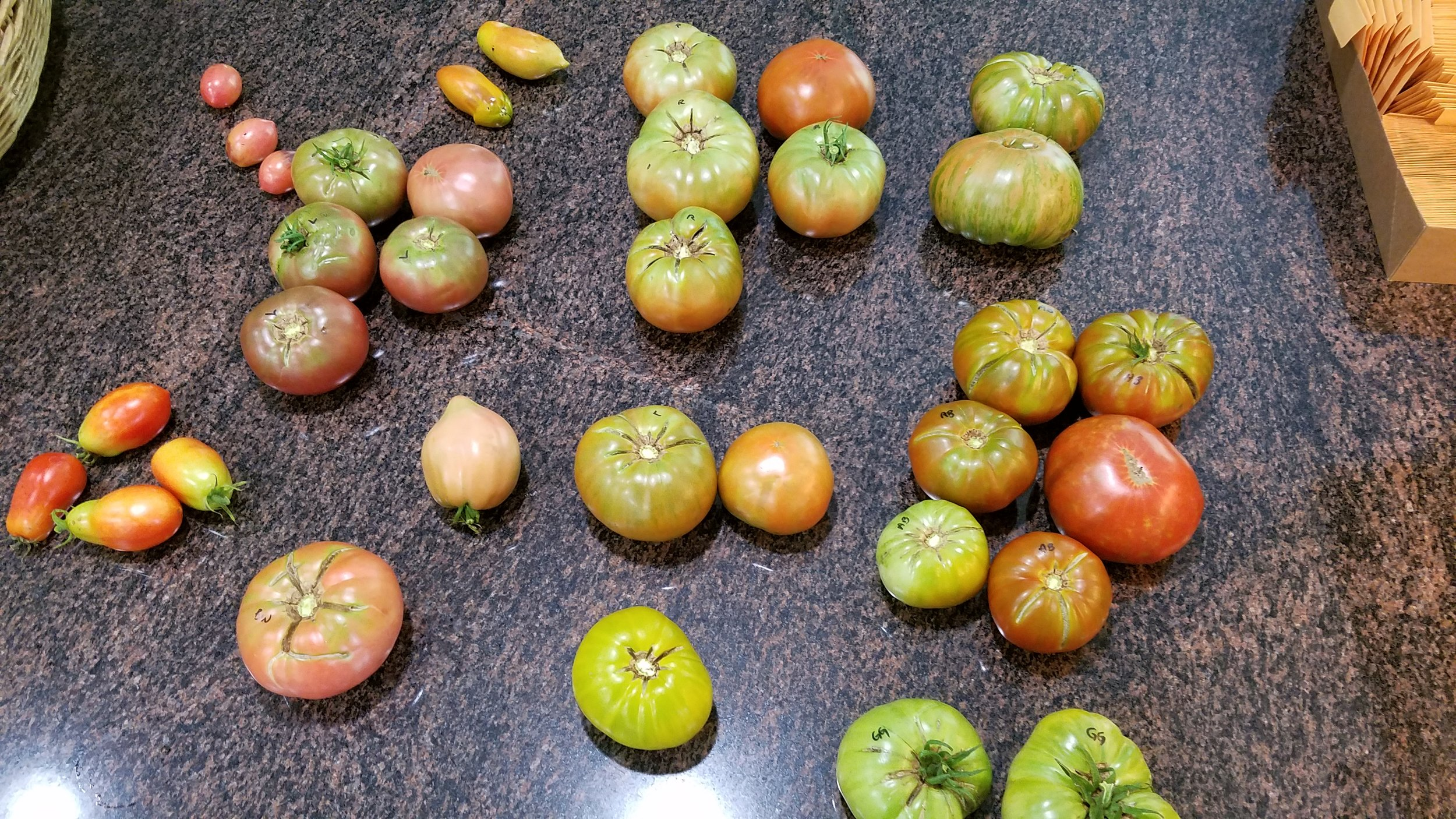 Early August 2017 harvest