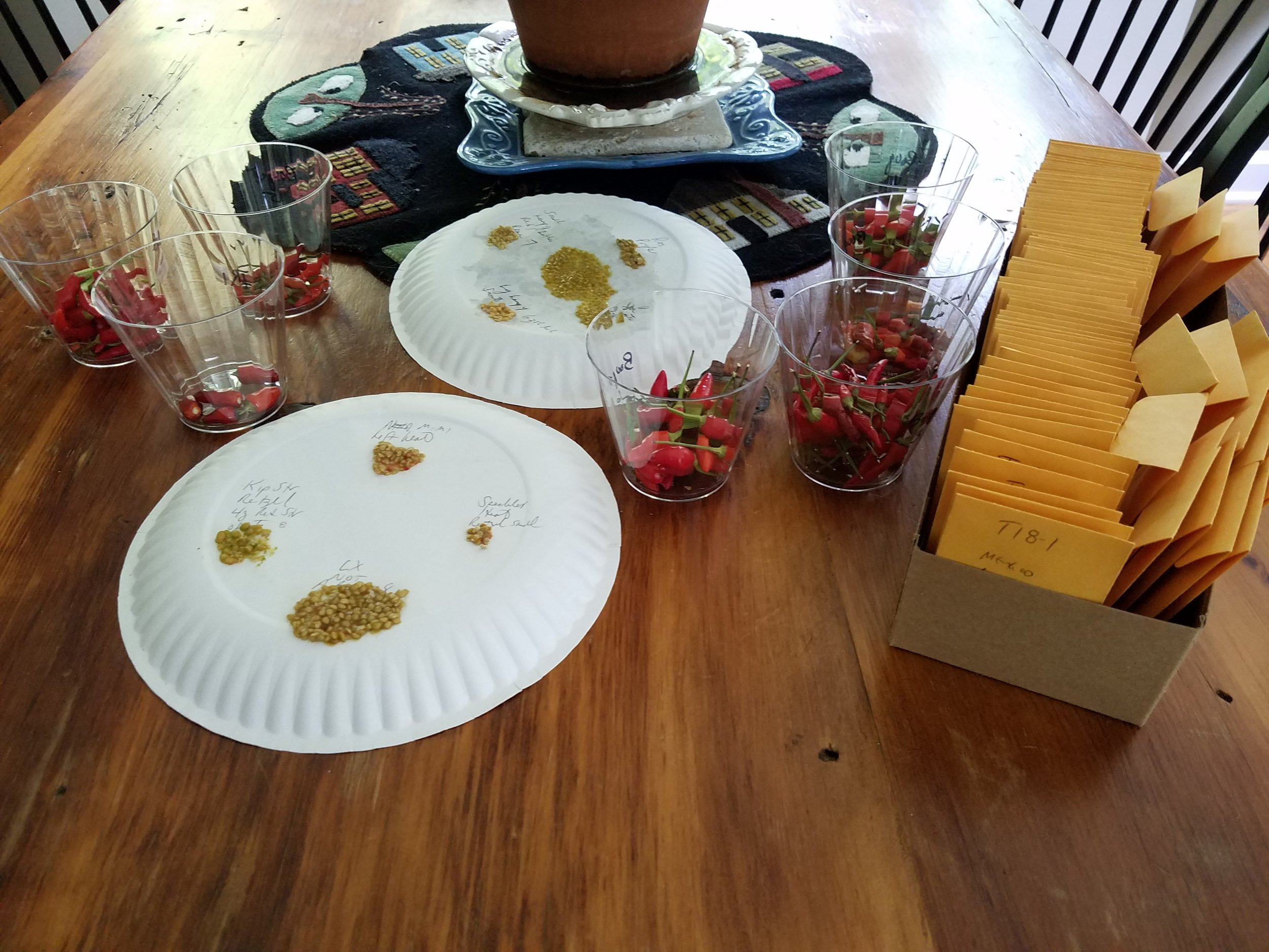 plates of drying tomato seeds, coin envelopes of saved seeds, cups of ornamental hot peppers ready for seed saving