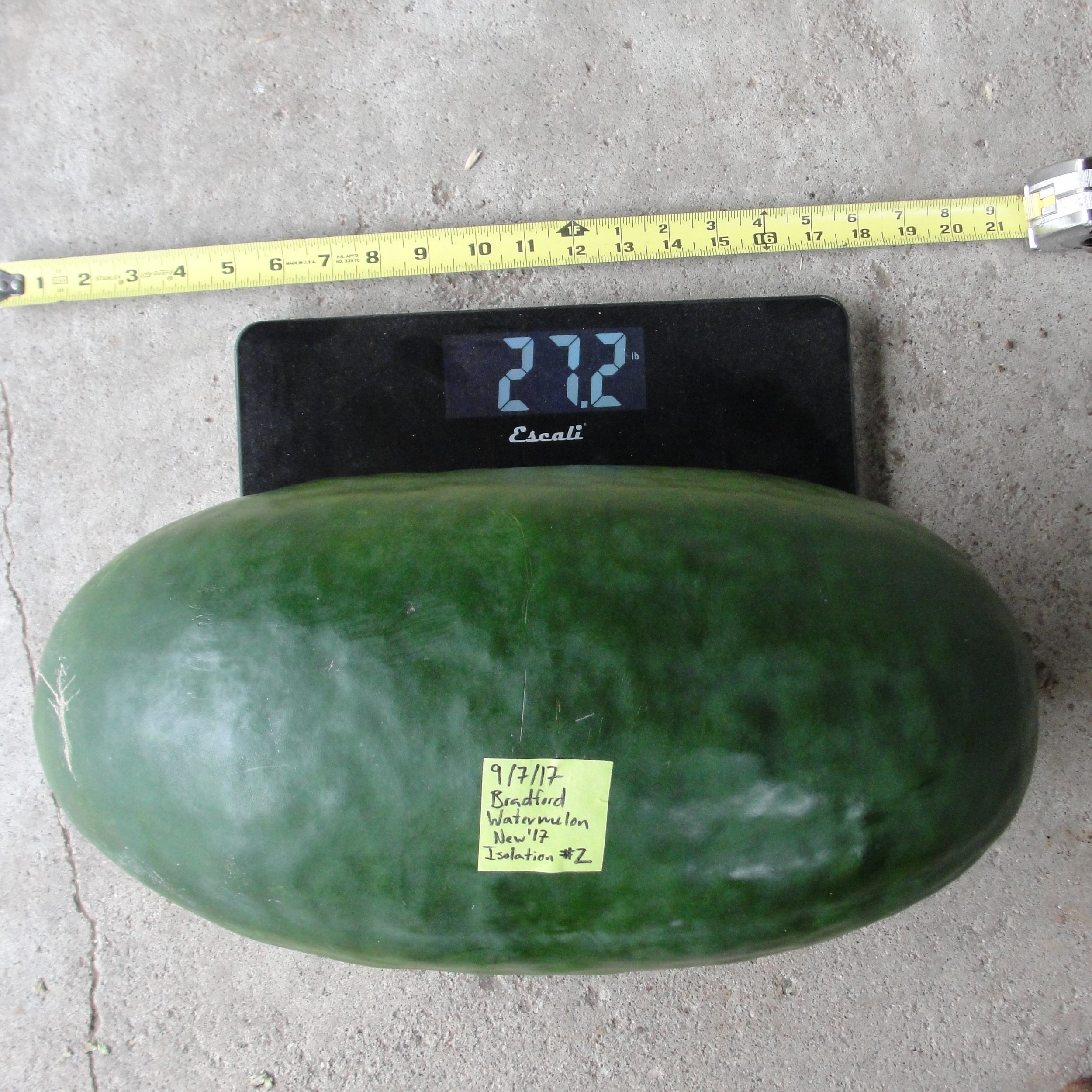 The Bradford Watermelon is now shared by Exchange lister, Bjorn Bergman