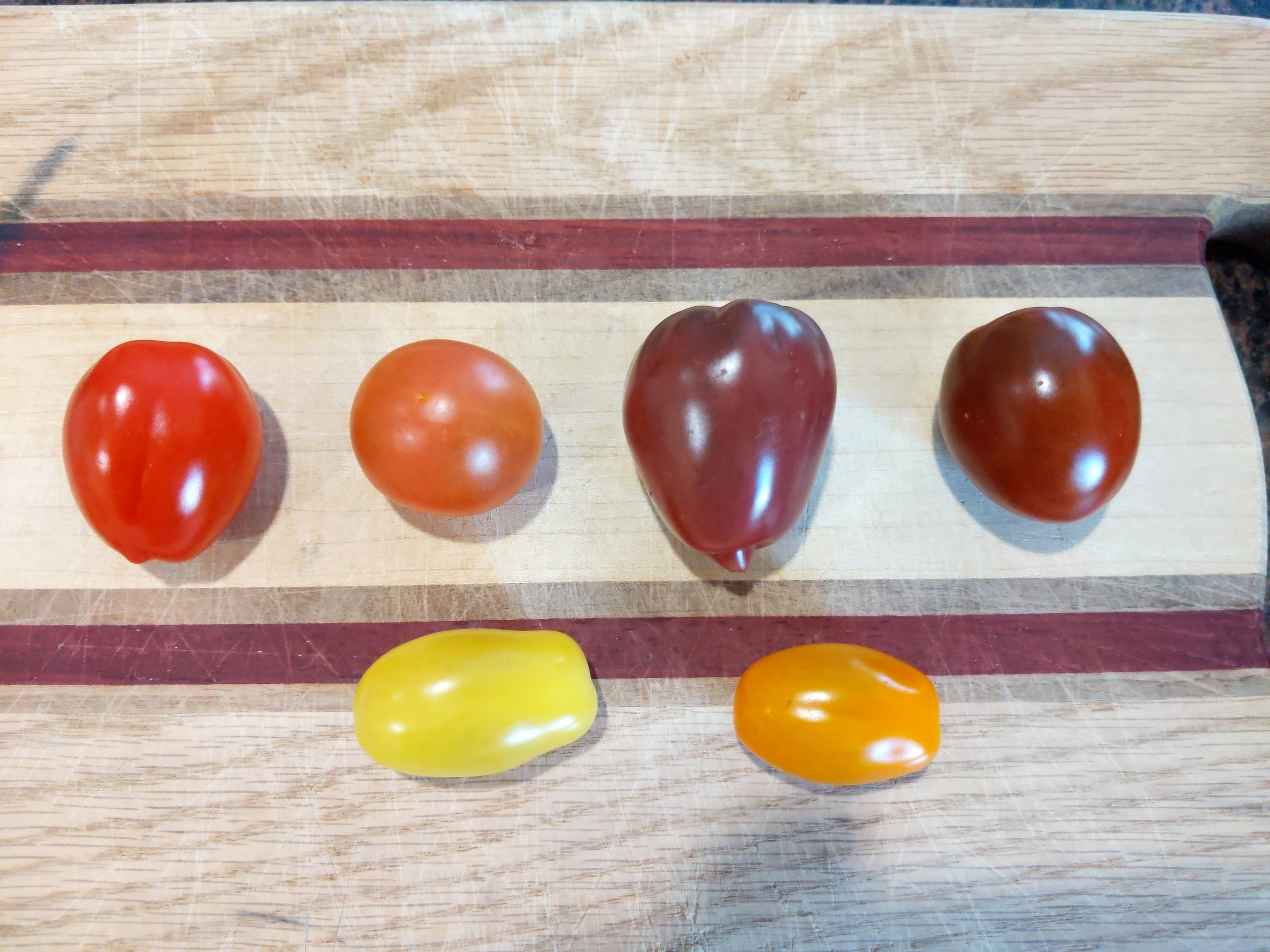 Even grocery stores carry tomatoes in a range of colors in 2019….let's talk about how we got here.