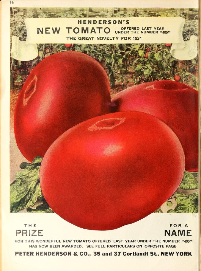 Page from 1925 Henderson catalog showing their large pink new tomato Winsall