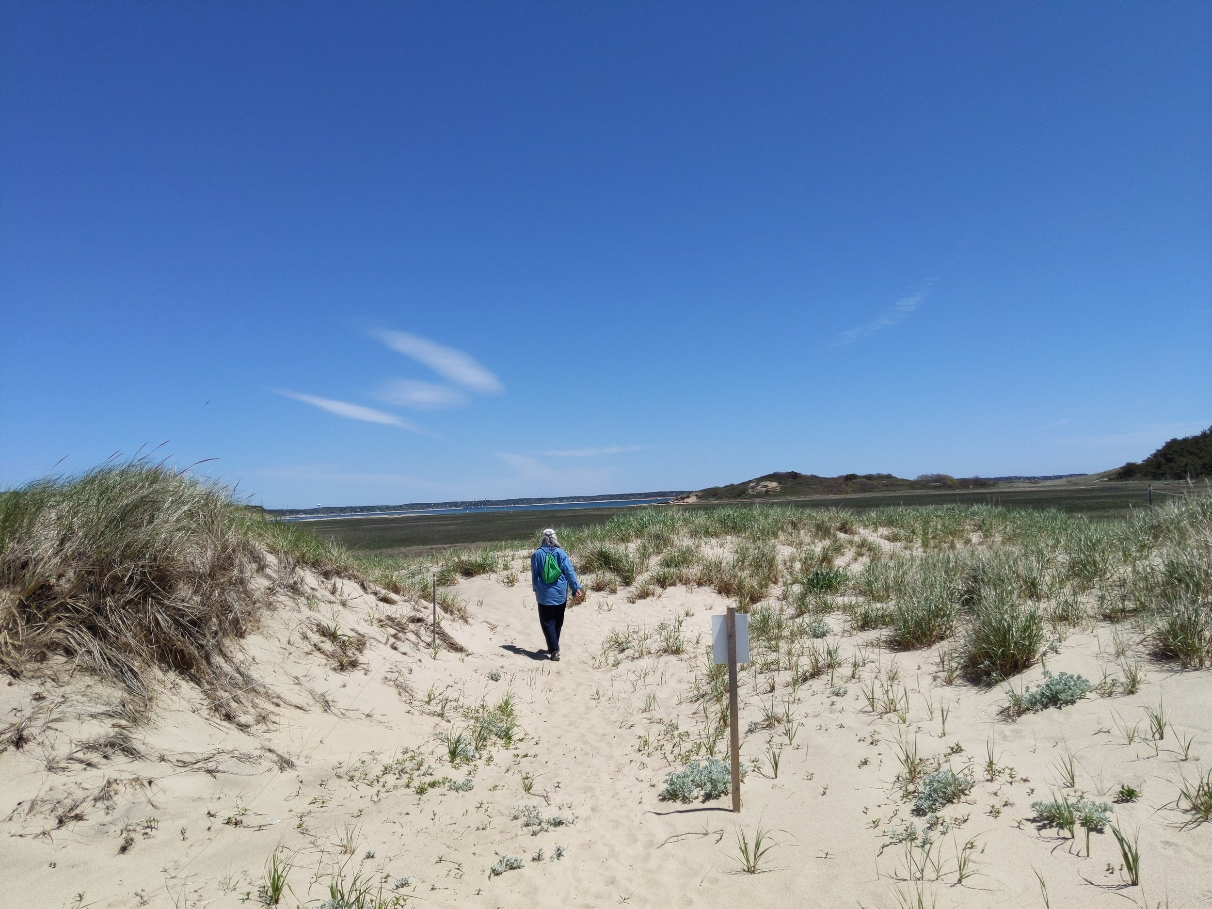 Sue, during our walk on a wonderful trail in Wellfleet, MA, Cape Cod