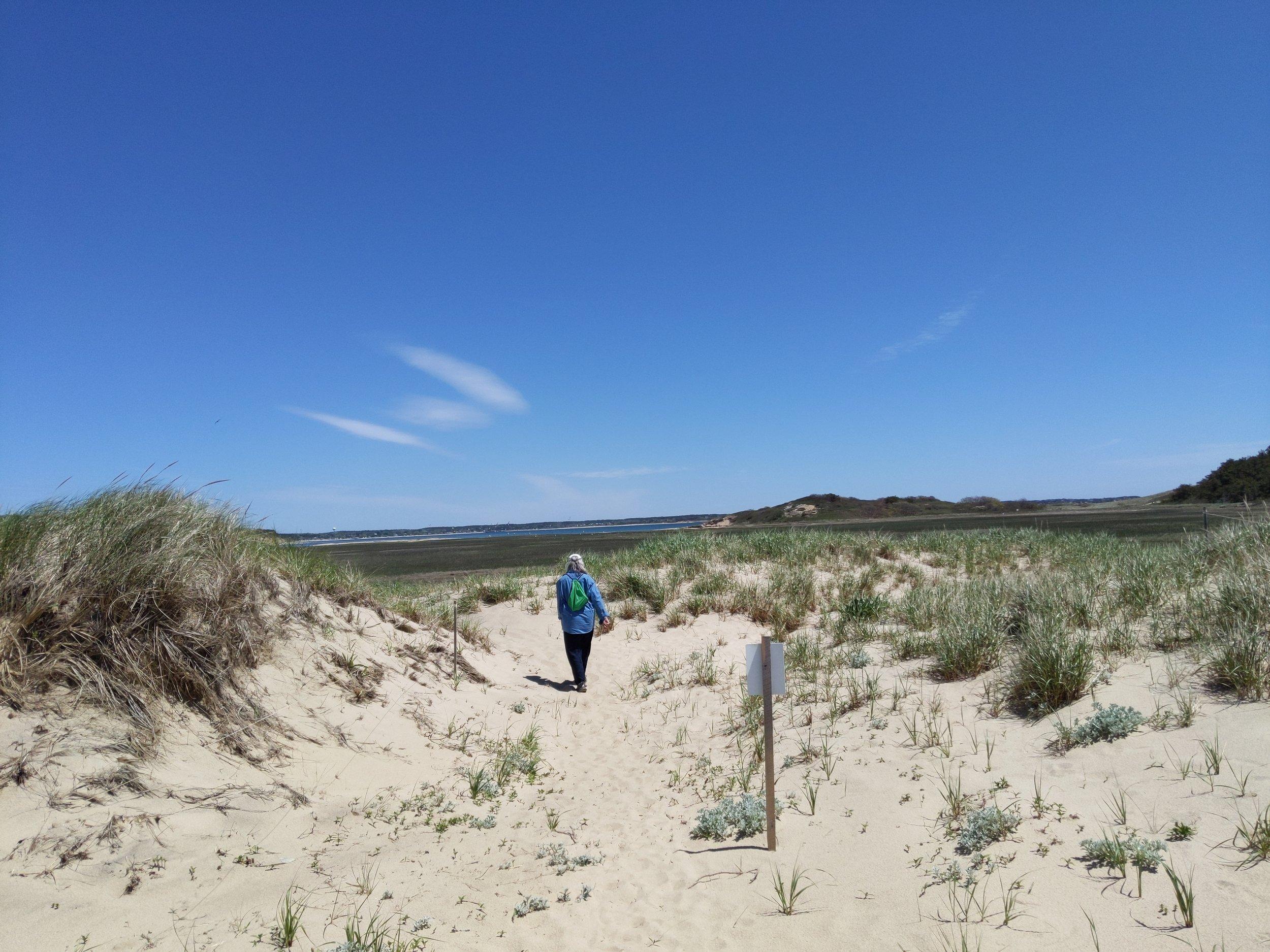 Sue, during our walk on a wonderful trail in Wellfleet, MA, Cape Cod
