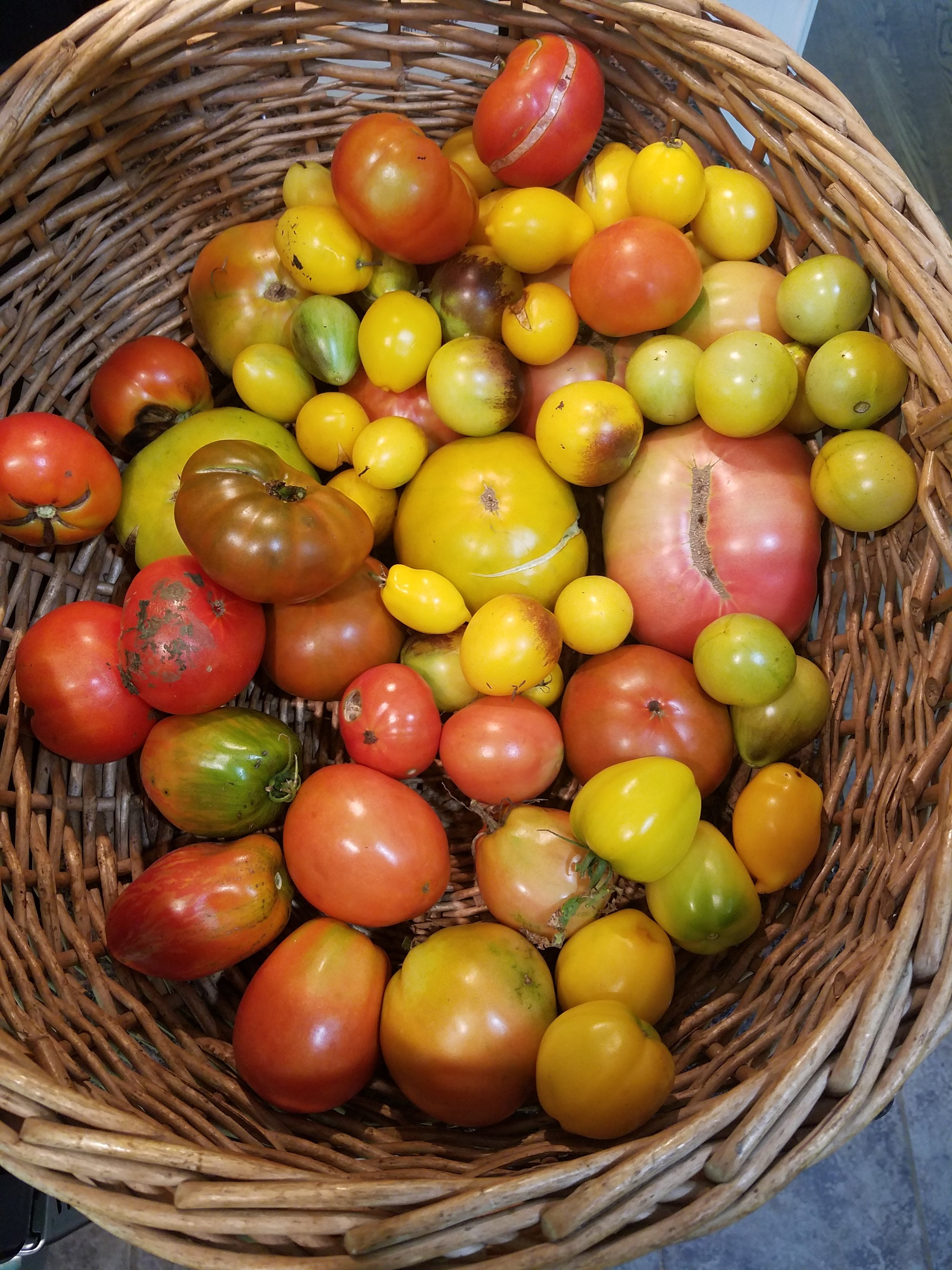 Tomato diversity from a 2018 August harvest