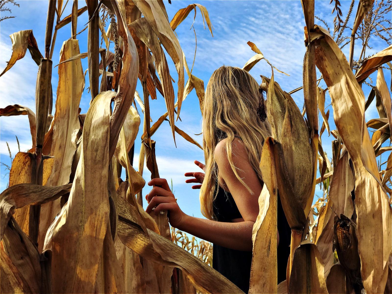 in the cornfield.jpg