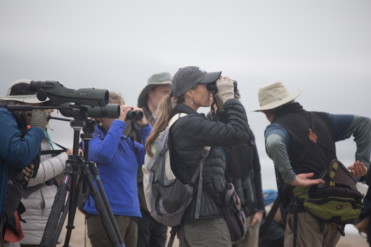 008-2019-Point-Reyes-Birding-Festival-Web-Sized.jpg