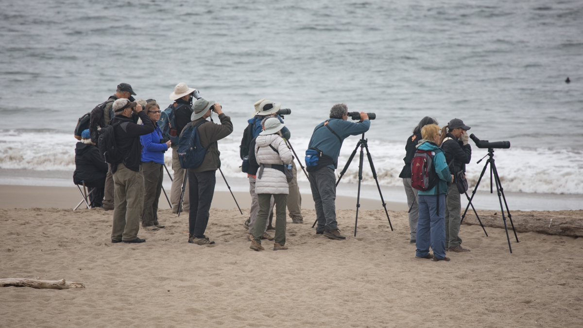 011-2019-Point-Reyes-Birding-Festival-Web-Sized.jpg