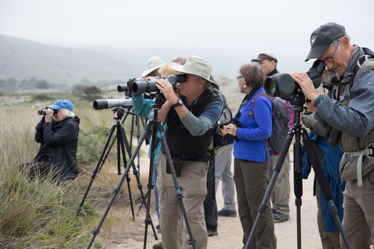 015-2019-Point-Reyes-Birding-Festival-Web-Sized.jpg