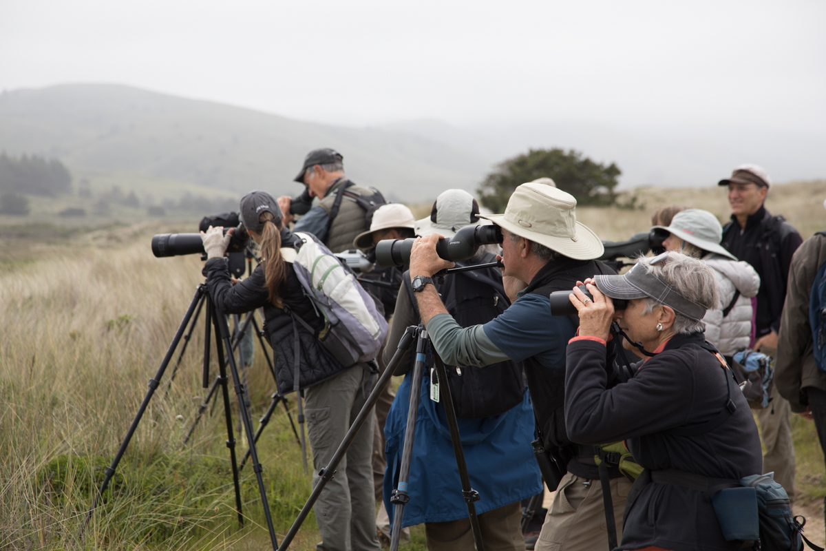 017-2019-Point-Reyes-Birding-Festival-Web-Sized.jpg