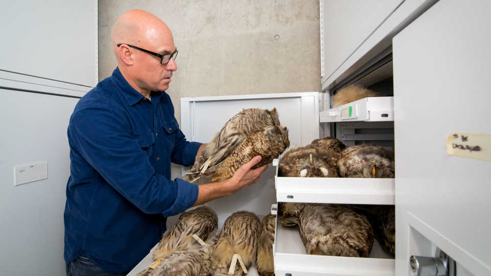 11-jack-dumbacher-and-owl-collection-5-c-2017-california-academy-of-sciences.jpg