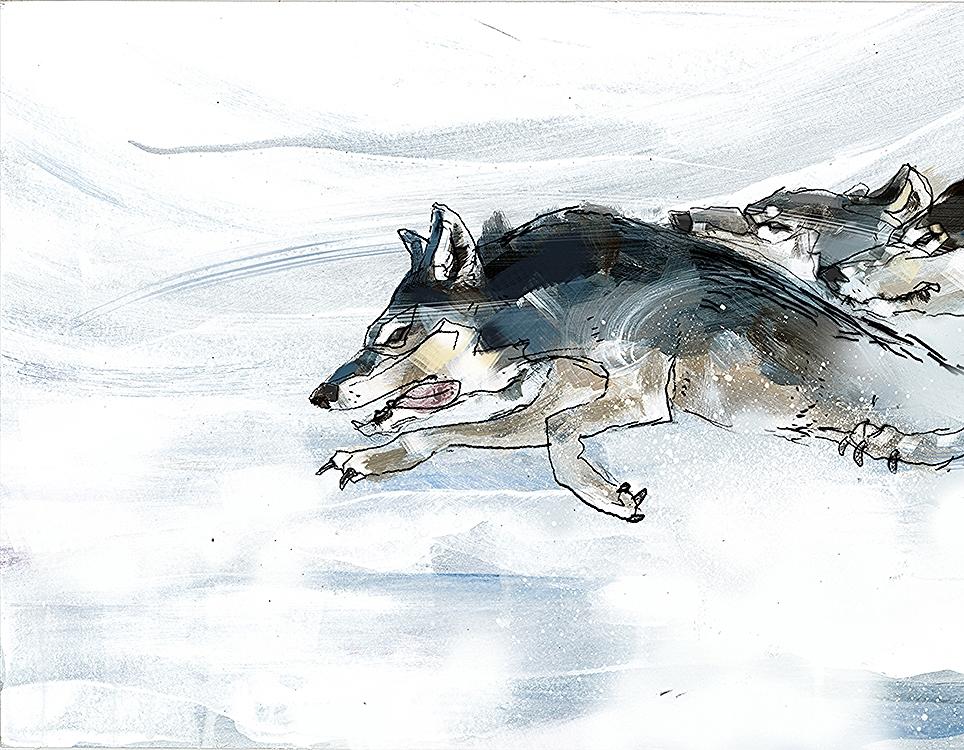 steppenwolf_03 copy.jpg