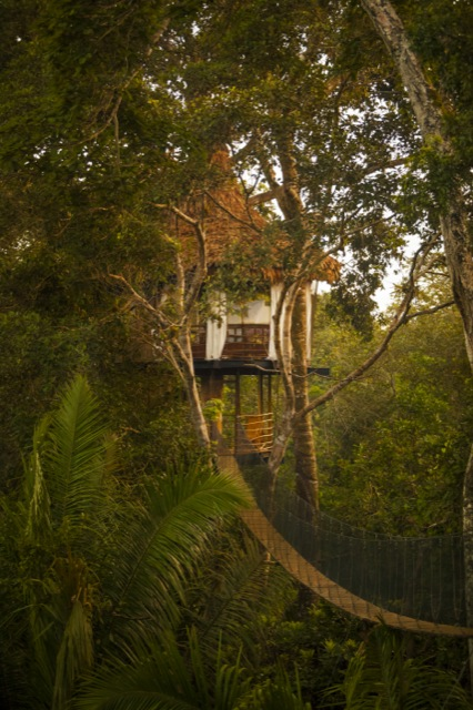 Copy of Treehouse Lodge, Yarapa River