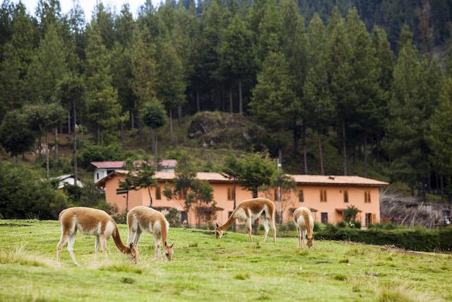 Granja Porcon - Vicu�as