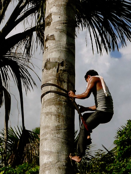 Selva Viva - Aguaje Project - Fruit Collection