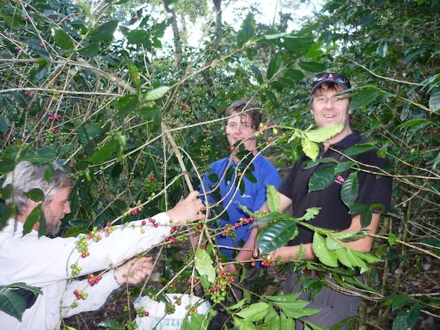 Salkantay Trek to Machu Picchu - Coffee Plants
