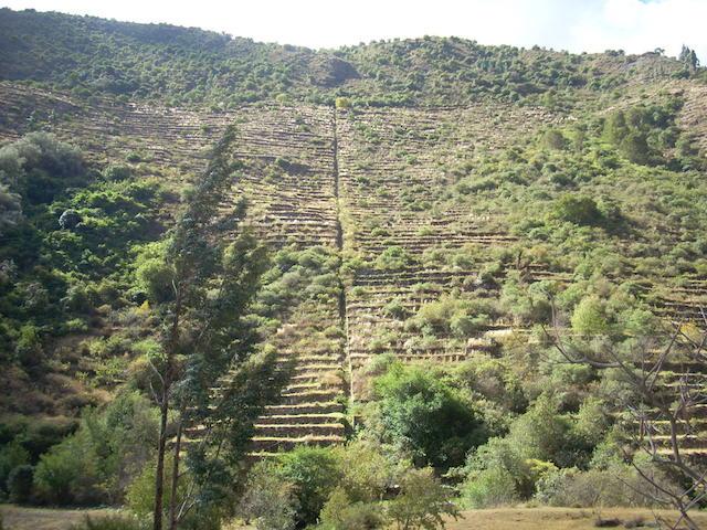 Inca terracing in Patacancha Valley.