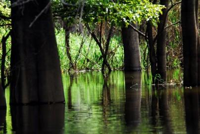 Pacaya-Samiria - Flooded Forest