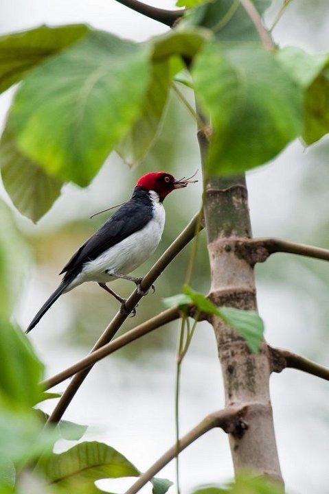 Northern Peru Birding Route - Amazonas.jpg