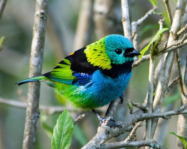 Northern Peru Birding Route - High Amazon.jpg