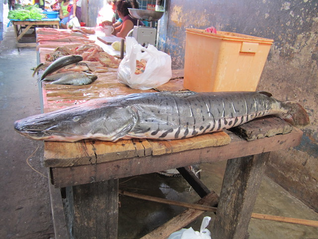Iquitos, Loreto - Belen Market - Catfish.JPG