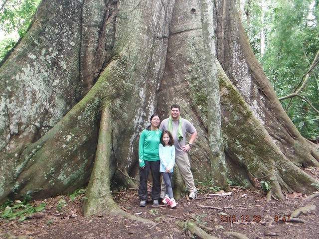 Amazon River Cruises - Ceiba Tree & Family.jpeg
