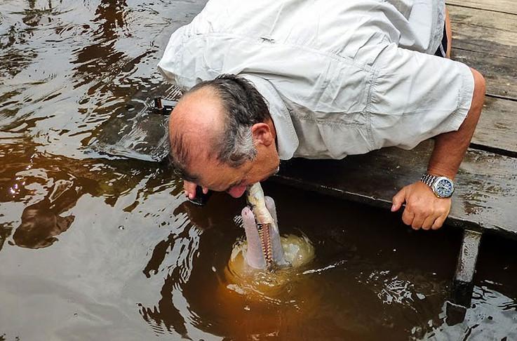 Anakonda Amazon Cruise - River Dolphin Feeding
