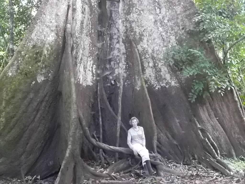 Anne Askew - Treehouse Lodge - Kapok Tree Roots.JPG