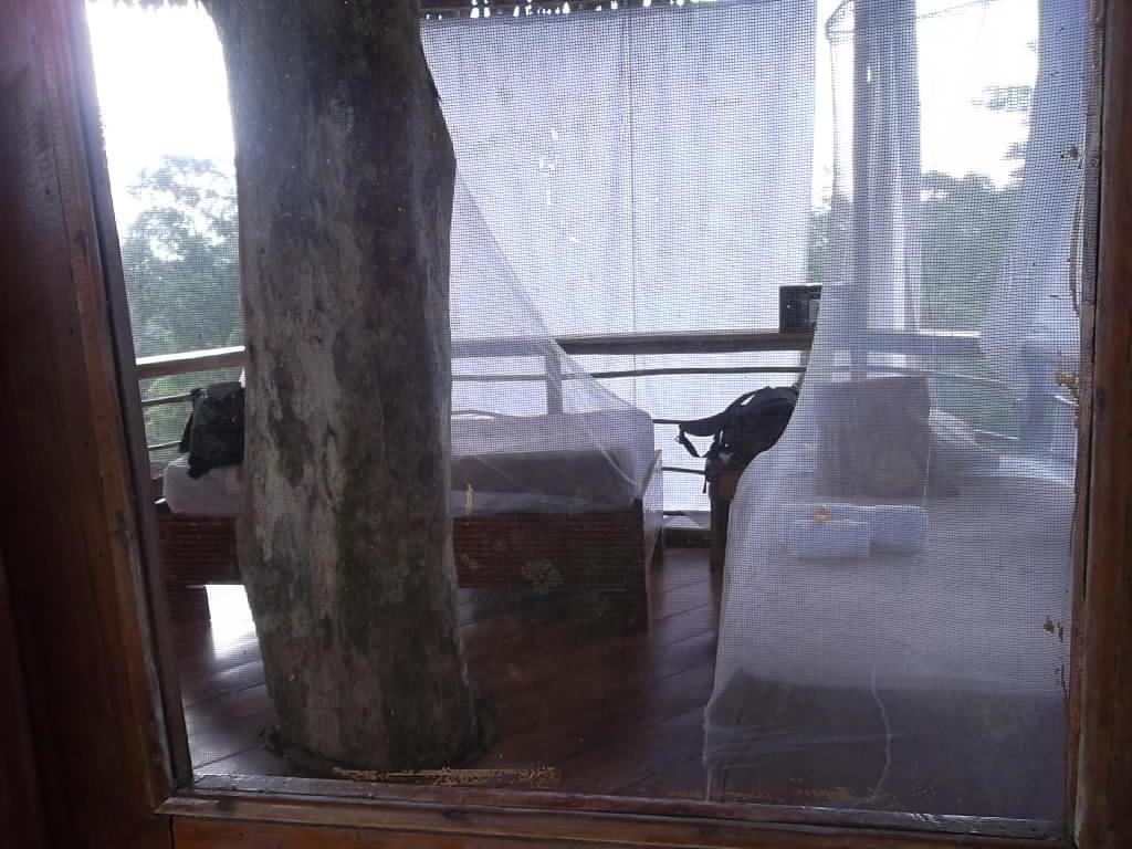 Anne Askew - Treehouse Lodge - Room Interior.JPG