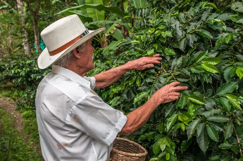 Colombian Highlights - Coffee Region - Bean Selection.jpg