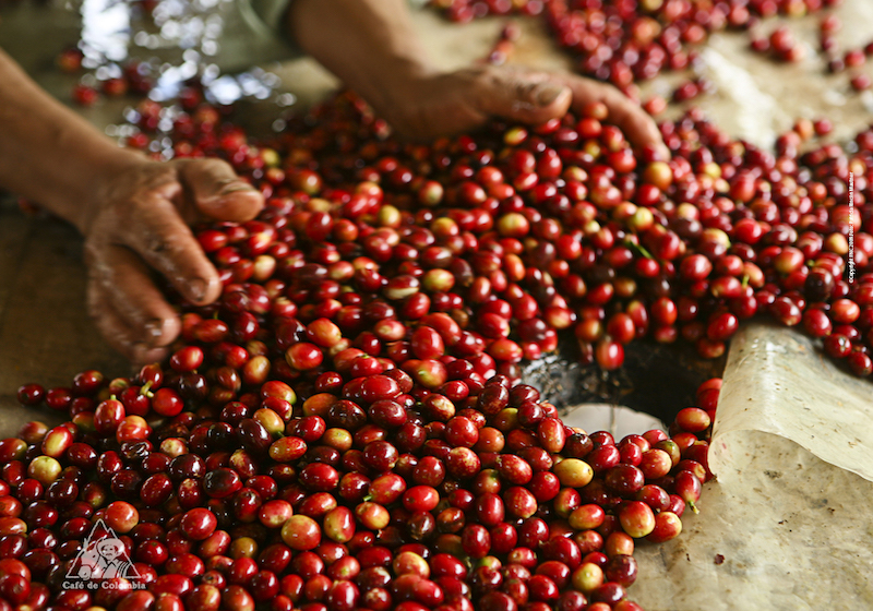 Colombian Highlights - Coffee Region - Coffee Beans.jpg