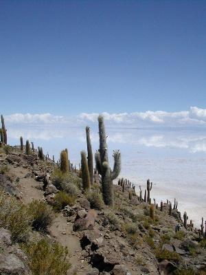 La Paz & Uyuni 4D - Fish Island.jpg