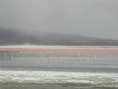 Some of the 30,000 James flamingos in Laguna Colorado.