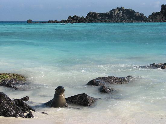 Galapagos Islands 5D - Beach with Seals.jpg