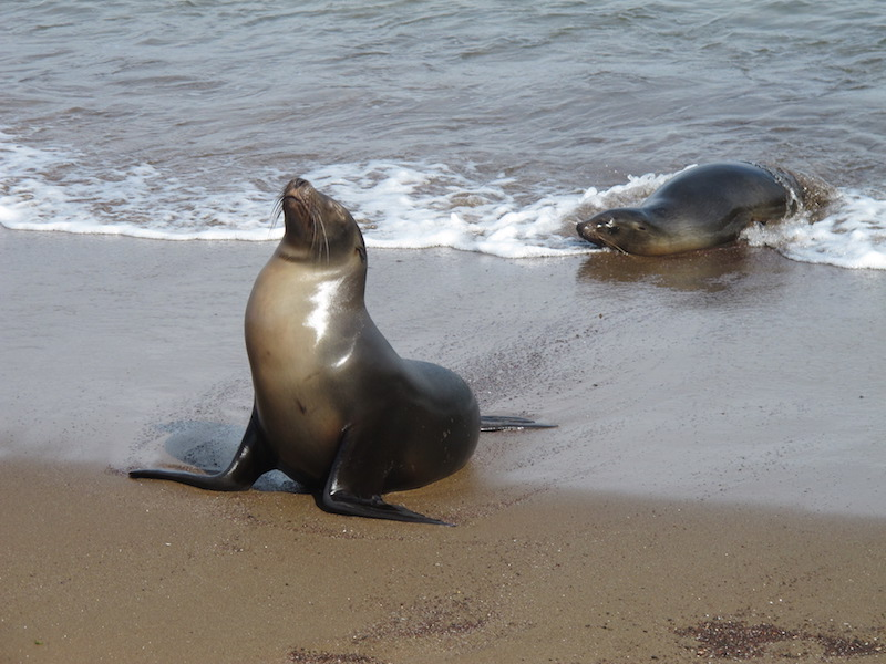 Galapagos Islands 5D - Sea Lions.JPG