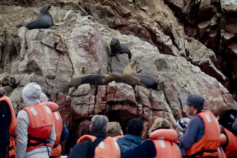 Close-up to sea lions on a Ballestas Islands boat tour.