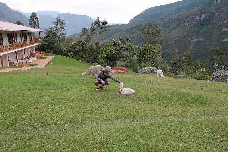 Longren x 2 - Gocta Lodge Alpacas.JPG