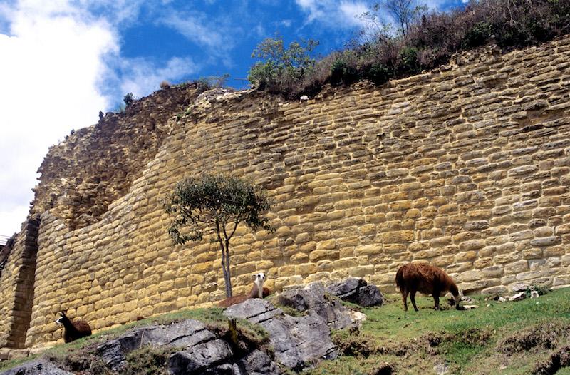 Tarapoto - Trujillo 9D - Kuelap & Llamas.jpg