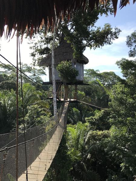 Kim & Josh Ford - Treehouse Lodge & Mapi Testimonial - Treehouse Canopy.jpg