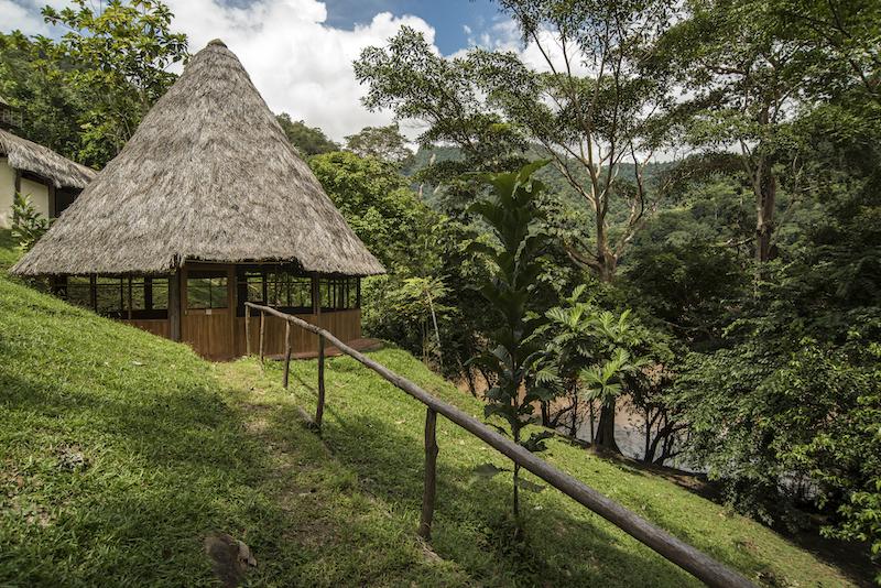 Chiclayo-Tarapoto Birding 15D - Pumarinri Amazon Lodge Grounds.jpg