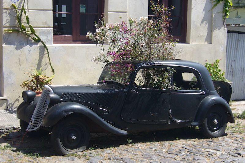 Buenos Aires & Calafate 7D - Flower Car.jpg