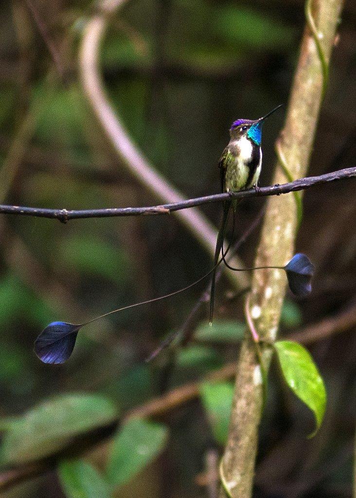 Northern Peru Birding Route 15D