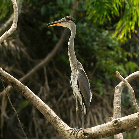 Amazon Lowlands Birding 4D