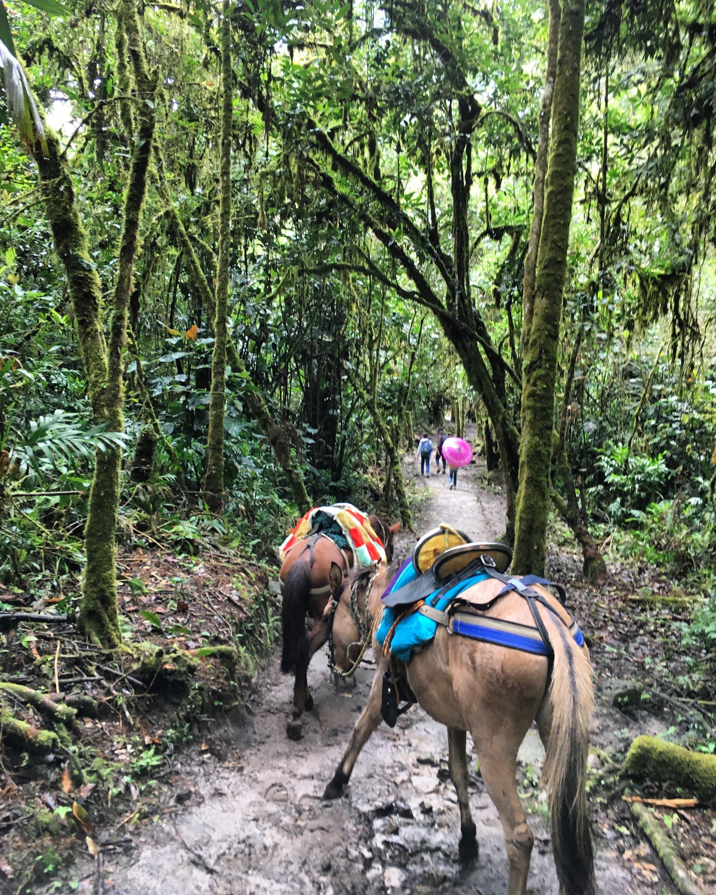Levy & Evers - Chachapoyas Testimonial - Gocta Falls Horses.jpg