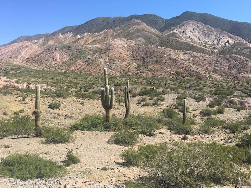 Pitts & Rollo - Chile & Argentina Testimonial - Cactus in Salta Region.JPG