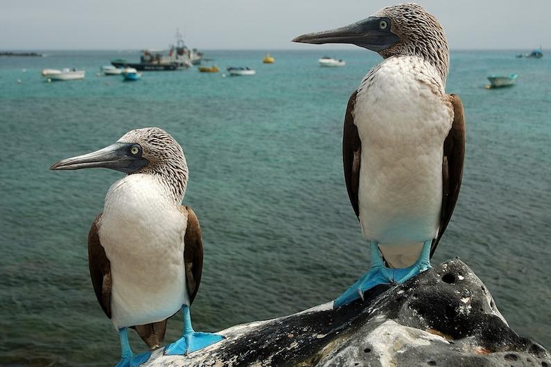 Galapagos Islands 5D