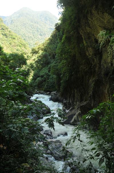 Yanachaga - Chemillen National Park3.jpg
