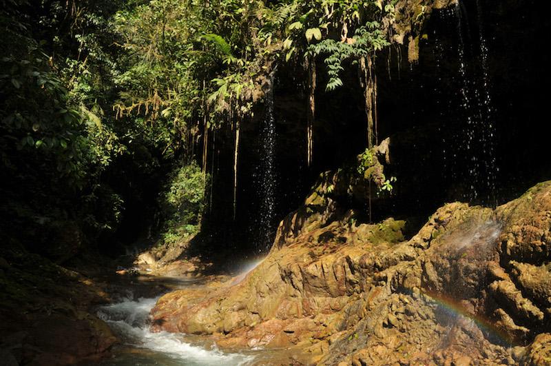 Yanachaga - Chemillen National Park4.jpg