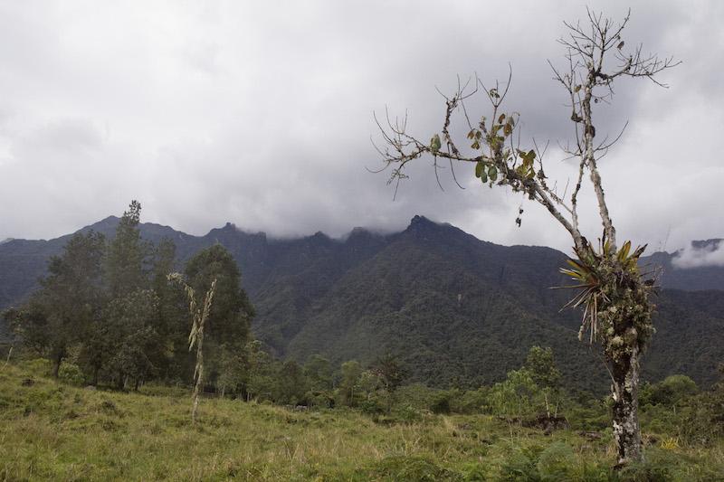 Yanachaga - Chemillen National Park8.jpg