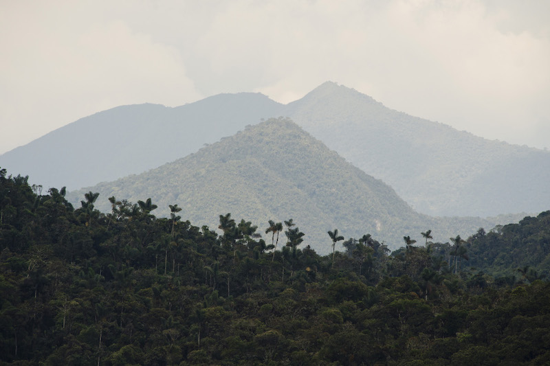 Yanachaga - Chemillen National Park9.jpg