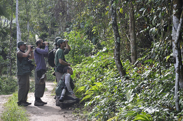 Allpahuayo-Mishana & Pacaya-Samiria 6D - Birding Group.jpg